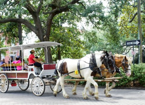 From iconic historic sites and tours to fantastic food and cultural attractions, here's how to spend 4 fun days in Savannah with kids!